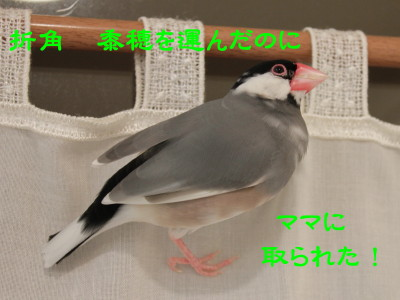 b0158061_22315183.jpg