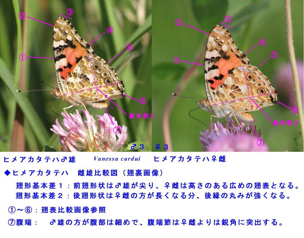 a0146869_646567.jpg