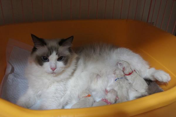 仔猫が誕生いたしました♪_a0188883_10493822.jpg