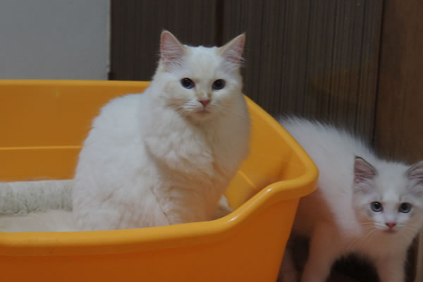 仔猫が誕生いたしました♪_a0188883_1122474.jpg