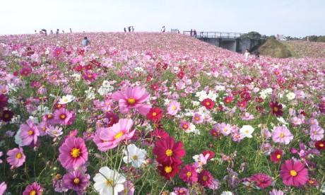 福岡便り♪_b0105897_20222311.jpg