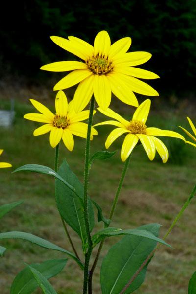 菜園の花いろいろ_e0048413_1912441.jpg