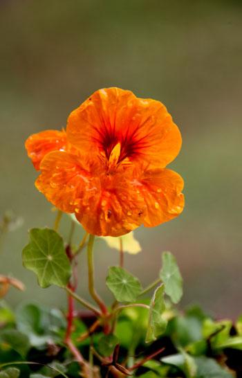 菜園の花いろいろ_e0048413_1913228.jpg