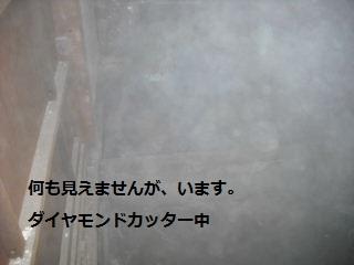 f0031037_194595.jpg