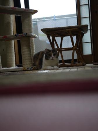 猫のお友だち マミちゃん編。_a0143140_2158066.jpg