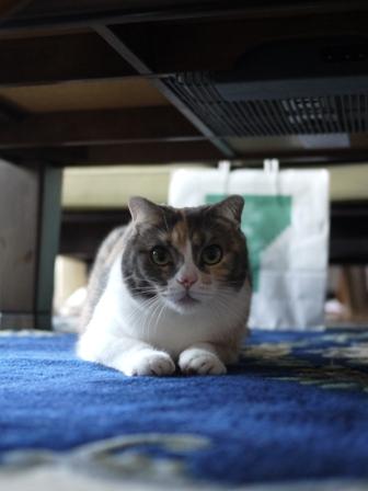 猫のお友だち マミちゃん編。_a0143140_21592450.jpg
