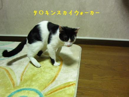b0151748_1218443.jpg