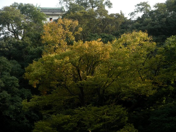 和歌山城公園散策_b0093754_23533720.jpg