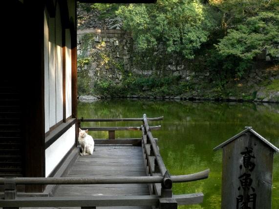 和歌山城公園散策_b0093754_2353559.jpg