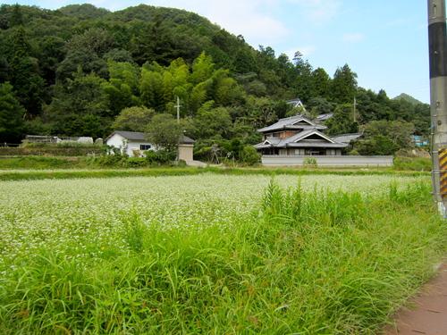 丹波篠山110km ロードトレーニング_d0174462_23325041.jpg
