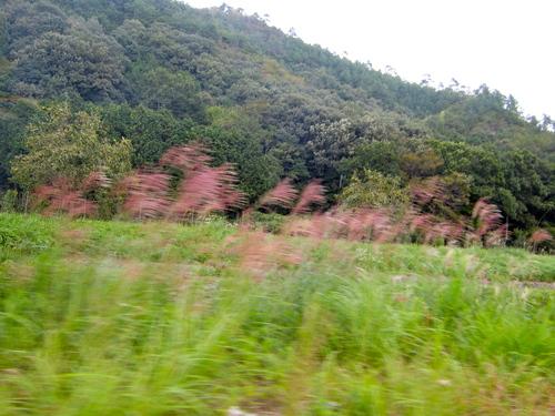 丹波篠山110km ロードトレーニング_d0174462_23575258.jpg