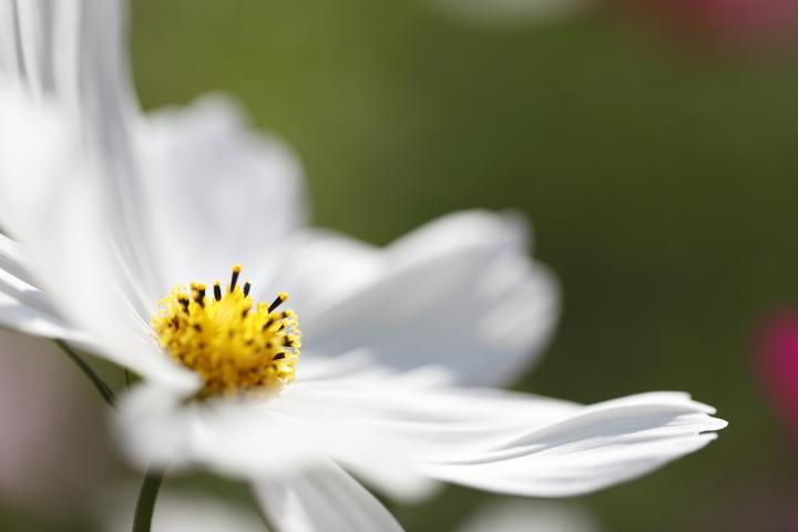 秋桜探し 【名城公園 2011】_d0108063_1648389.jpg