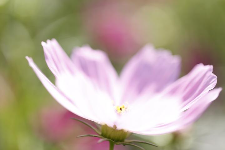 秋桜探し 【名城公園 2011】_d0108063_16493159.jpg