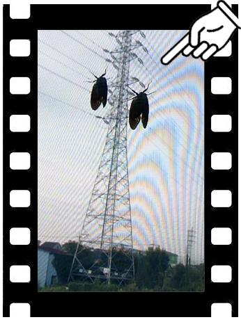 a0221668_1648073.jpg