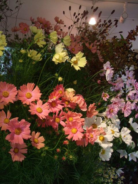オークリーフ(秋の花まつり)_f0049672_12452488.jpg