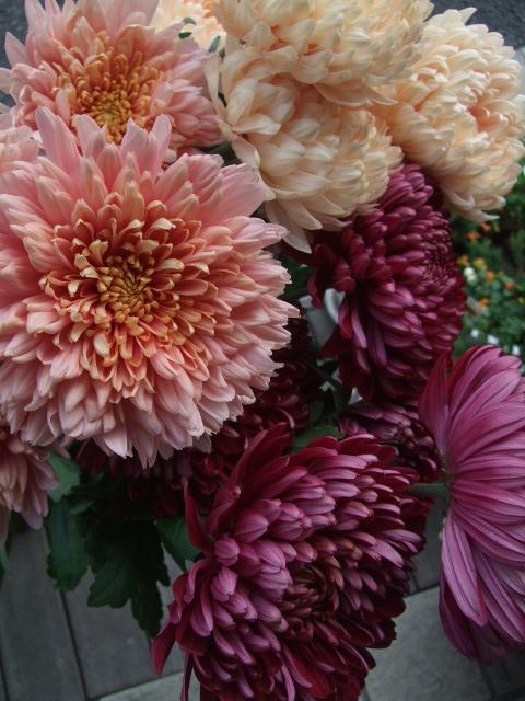 オークリーフ(秋の花まつり)_f0049672_12454386.jpg