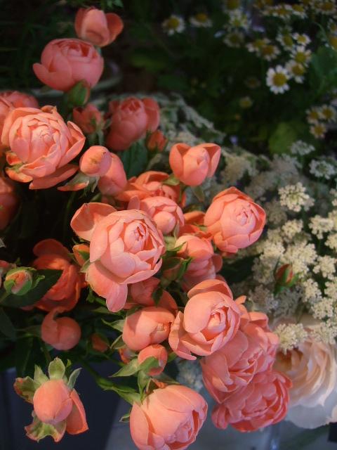 オークリーフ(秋の花まつり)_f0049672_12463230.jpg