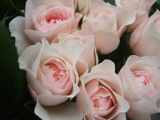 オークリーフ(秋の花まつり)_f0049672_12464279.jpg