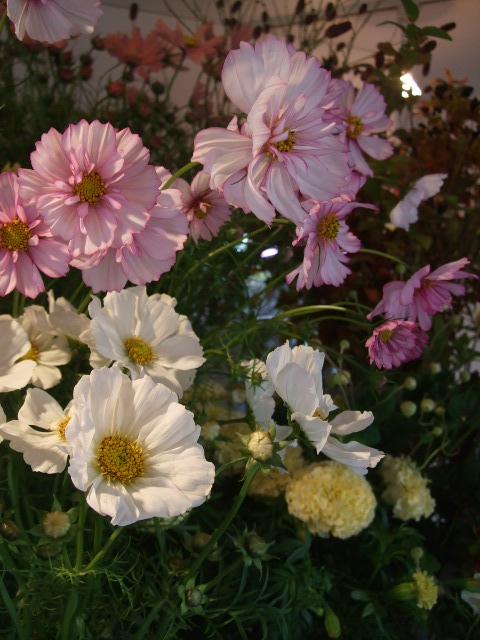 オークリーフ(秋の花まつり)_f0049672_1246523.jpg