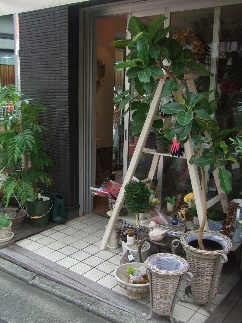 オークリーフ(秋の花まつり)_f0049672_12515693.jpg