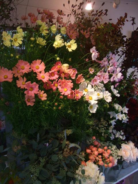 オークリーフ(秋の花まつり)_f0049672_12533178.jpg