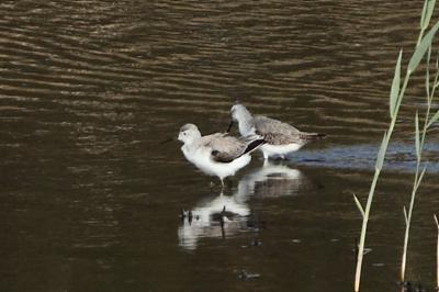 ★先週末の鳥類園(2011.10.8~10)_e0046474_20262616.jpg