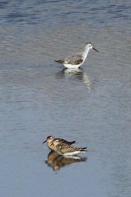 ★先週末の鳥類園(2011.10.8~10)_e0046474_20282823.jpg
