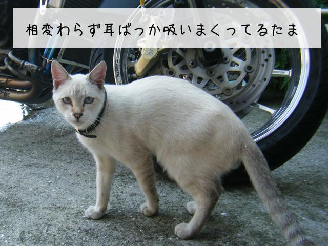 f0008935_05735.jpg