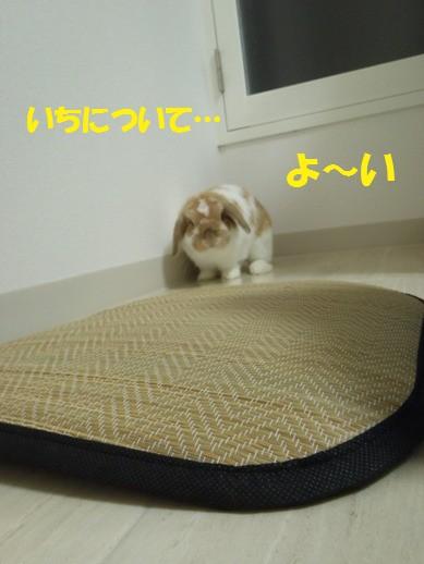 d0175755_23573880.jpg