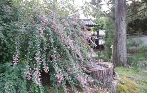 秋を感じる…萩_d0082356_10133665.jpg