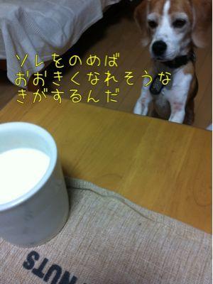 b0098660_2144626.jpg