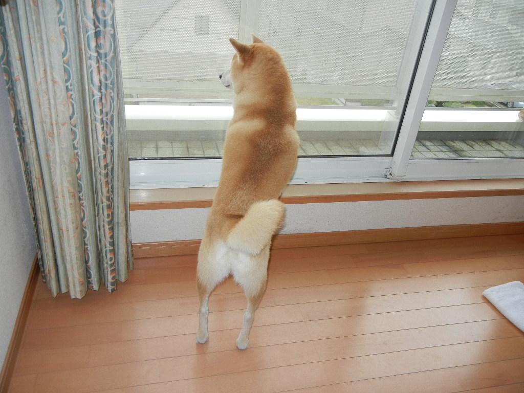 2011年10月15日(土)雨の土曜日!_f0060461_1521735.jpg