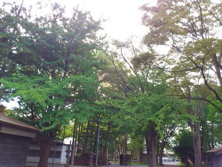 自然豊かな亀田八幡宮_b0106766_1636582.jpg
