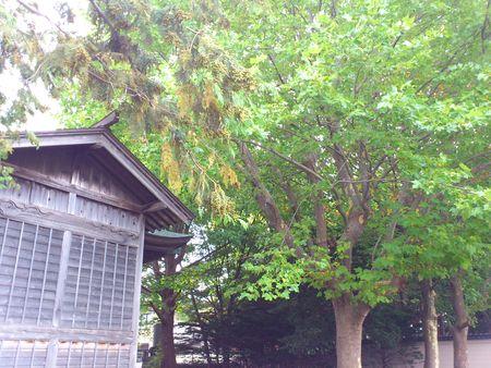 自然豊かな亀田八幡宮_b0106766_16365981.jpg
