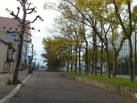函館市街地の紅葉_b0106766_16383922.jpg