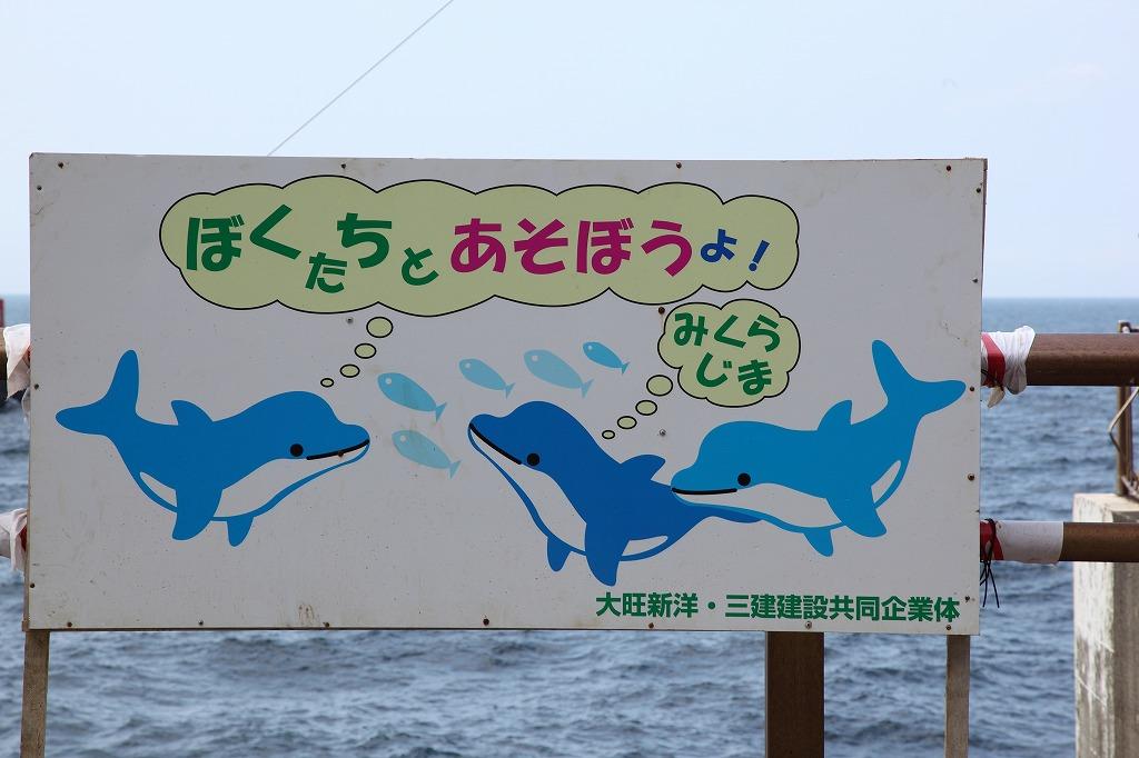 新婚旅行は御蔵島_e0105376_15195.jpg