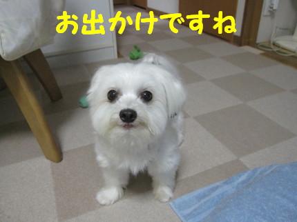 b0193480_17152430.jpg