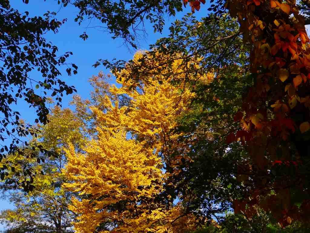 公園の紅葉も綺麗_f0138096_1711832.jpg