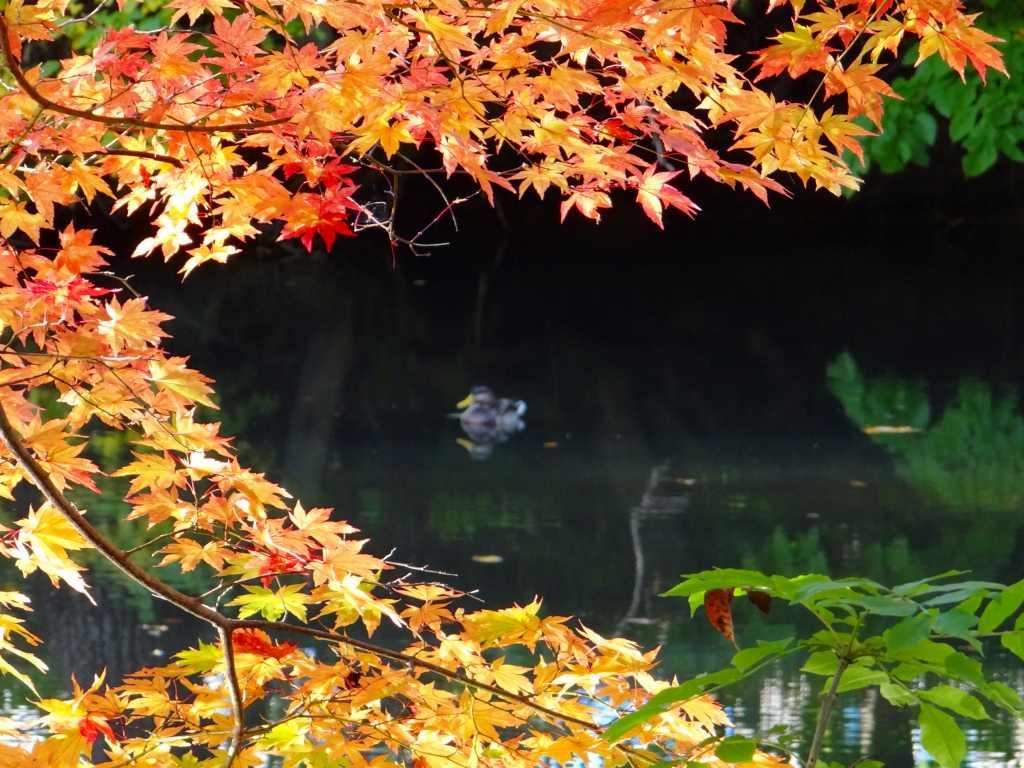 公園の紅葉も綺麗_f0138096_171301.jpg