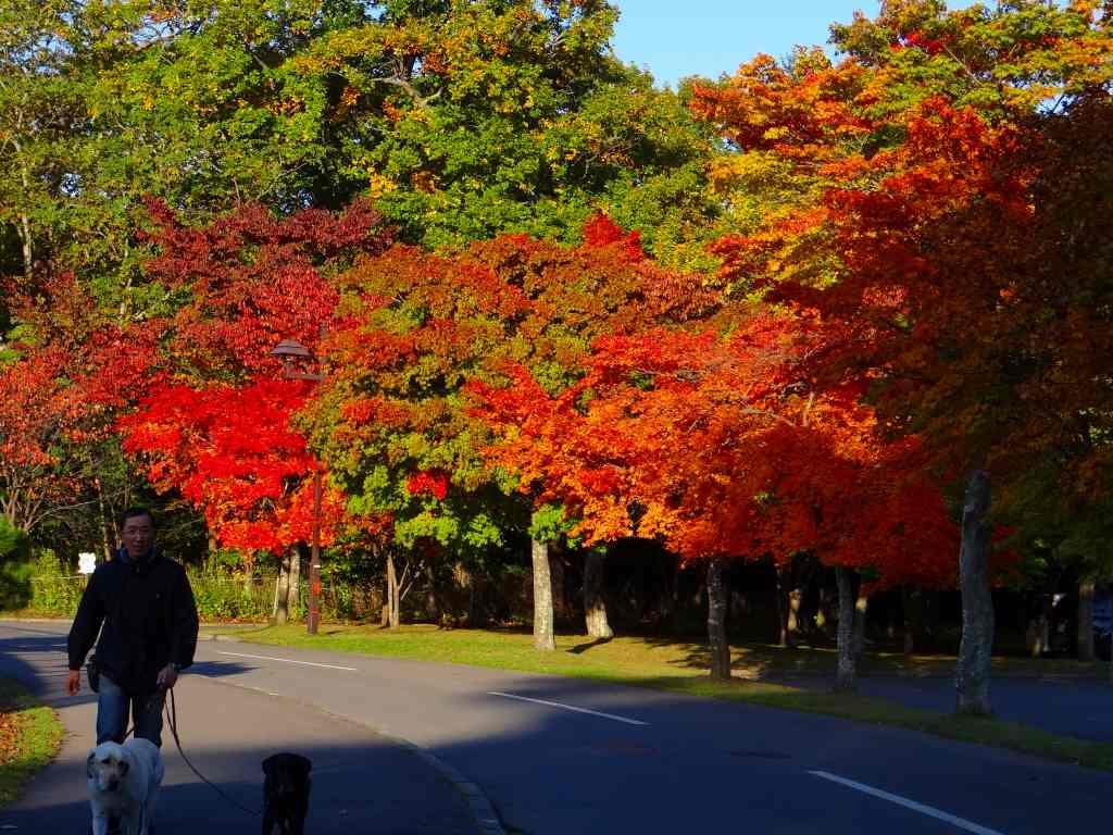 公園の紅葉も綺麗_f0138096_1714114.jpg