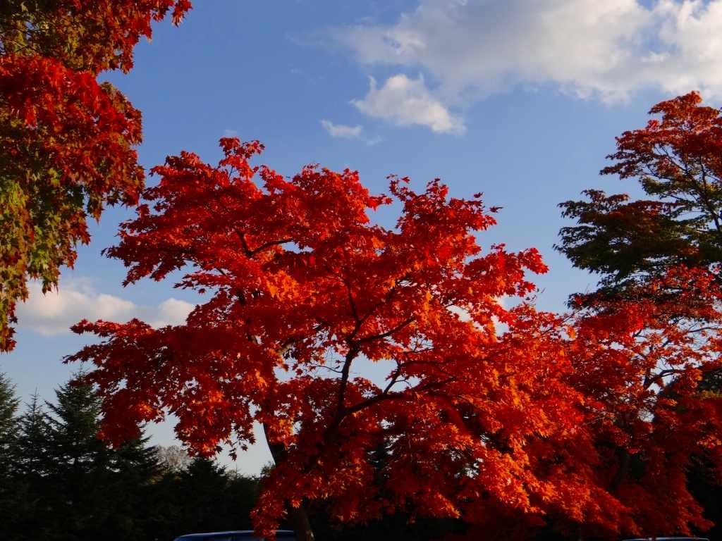 公園の紅葉も綺麗_f0138096_1715645.jpg