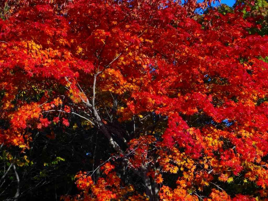 公園の紅葉も綺麗_f0138096_1721092.jpg