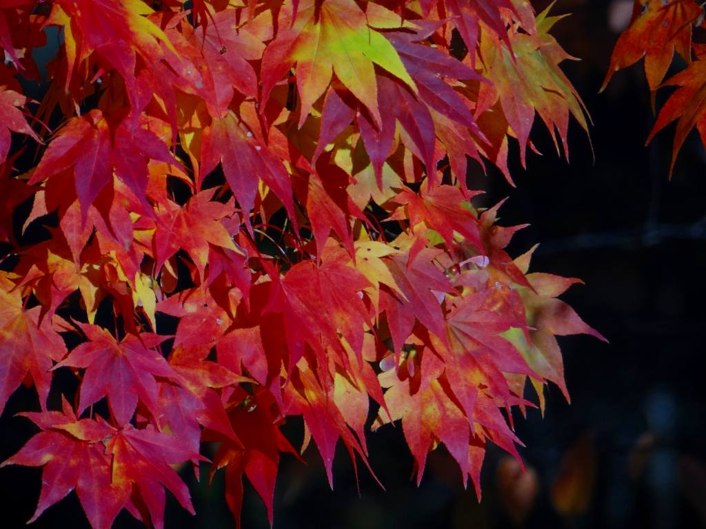 公園の紅葉も綺麗_f0138096_1723747.jpg