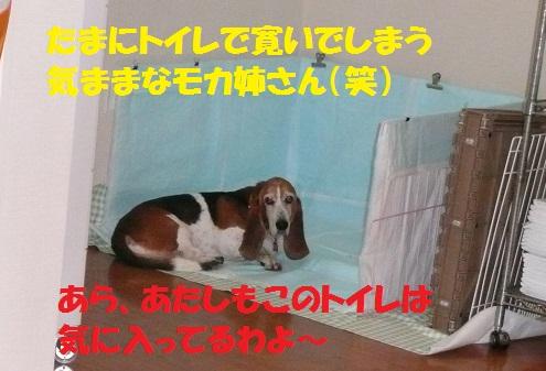 f0121712_324355.jpg