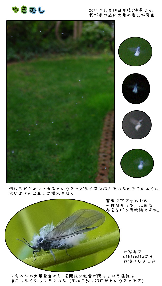 b0019313_1761414.jpg