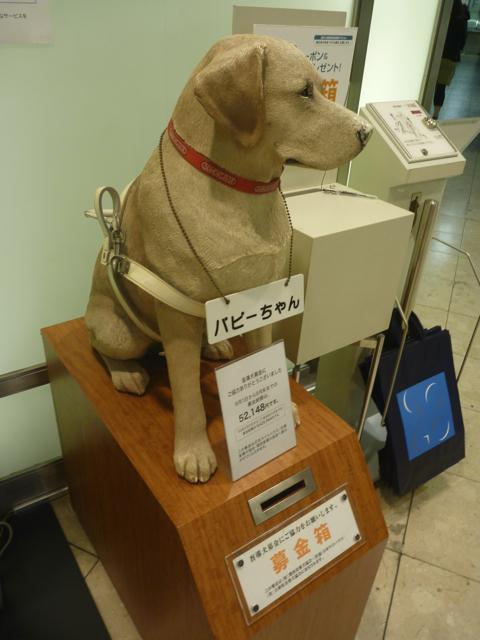 盲導犬育成募金_b0054727_13362465.jpg