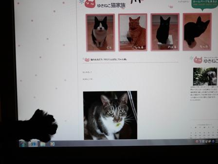 にょきにょき猫 のぇる編。_a0143140_22462730.jpg