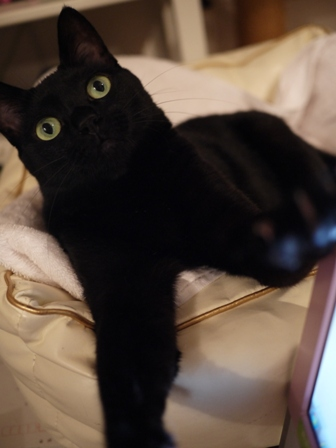 にょきにょき猫 のぇる編。_a0143140_22492447.jpg