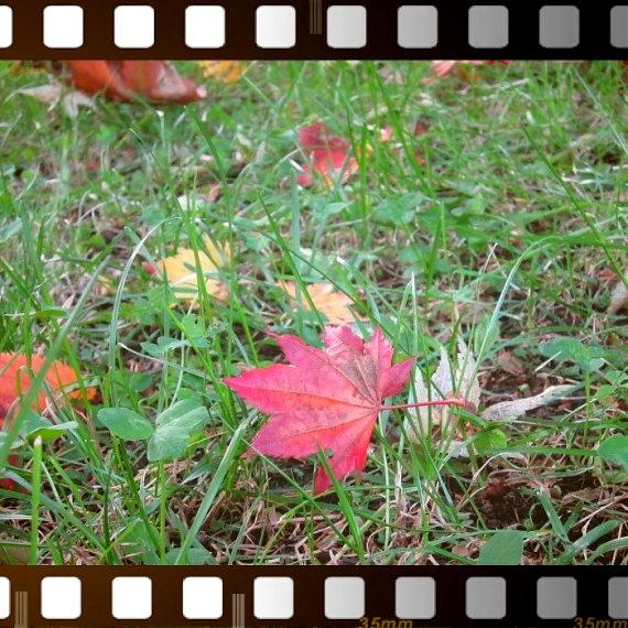 秋の色_e0199776_17344637.jpg