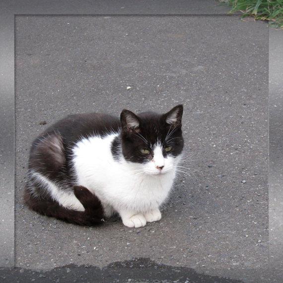 ご近所の猫たち_e0199776_17382916.jpg